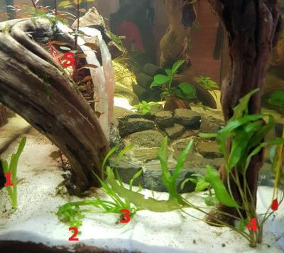 Plantation du coin gauche de l'aquarium