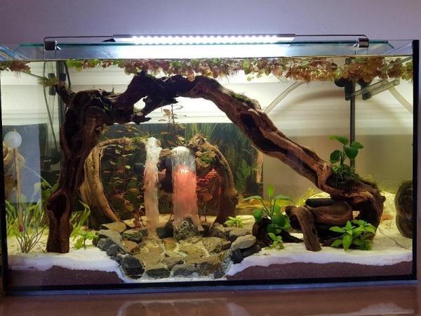 L'aquarium terminé