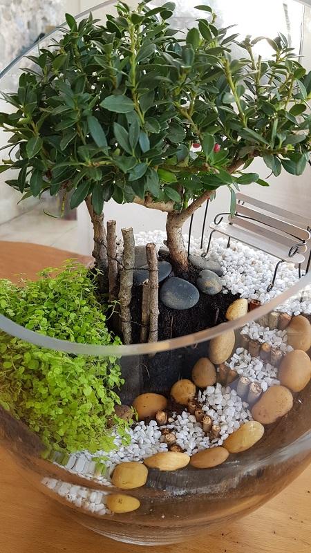 http://www.latelierderosabel.com/medias/images/bonsai-elise-1.jpg