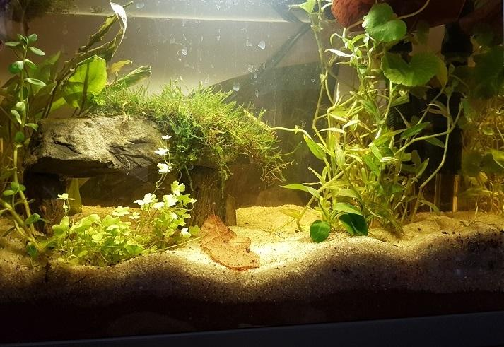 Le dolmen dans l'aquarium
