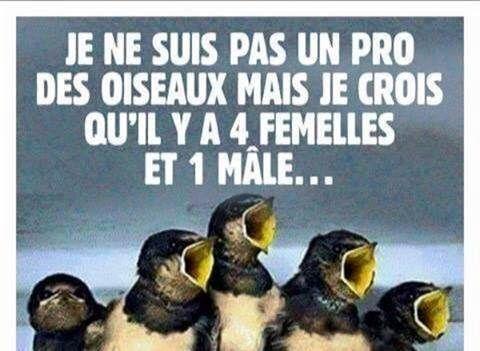 http://www.latelierderosabel.com/medias/images/oiseau-male.jpg