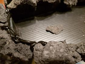 Le rejointoyage des pierres, la pose du silicone