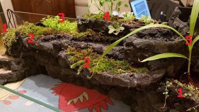Les plantes émergées