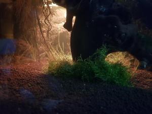 La petite lampe sous la grotte