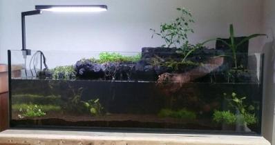 Riparium, un bord de rivière à la maison
