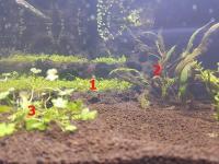 Les plantes immergées à l'extrème gauche