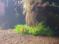 Les plantes immergées à droite