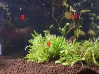 Les plantes immergées à l'extrème droite